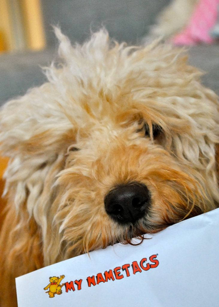 Bertie with My Nametags envelope