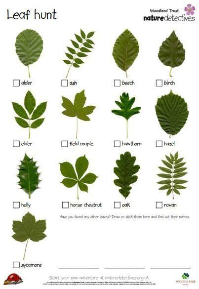 leaf dectective